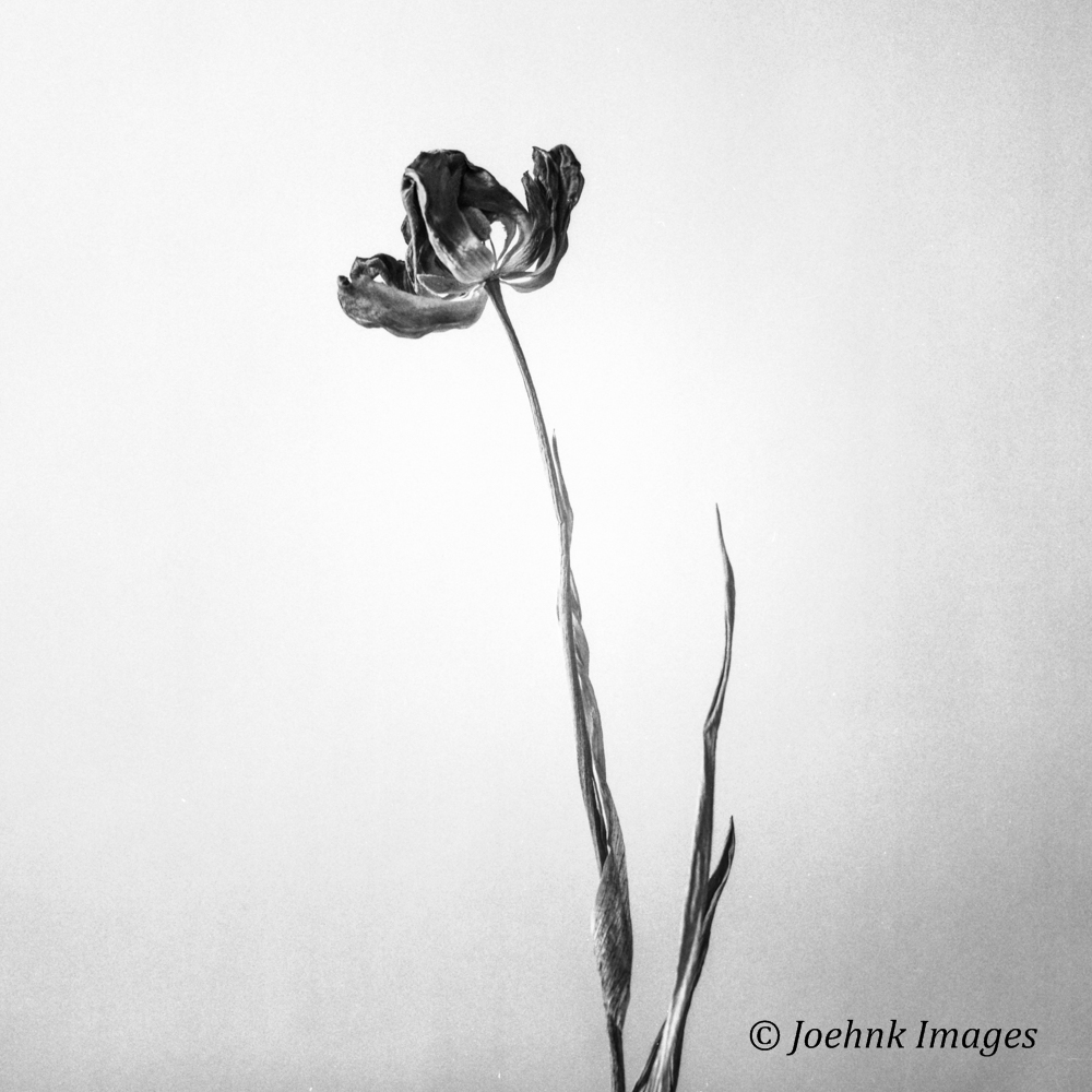 Flowers Past #57