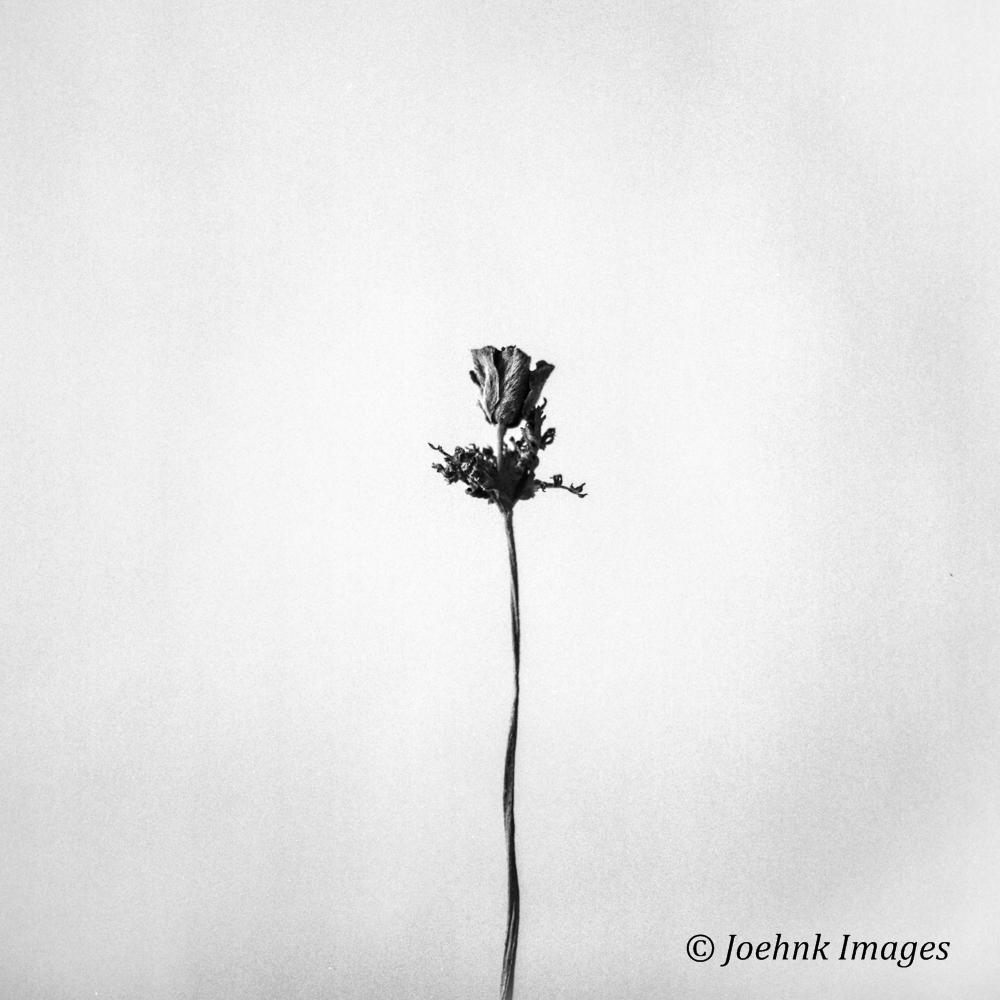 Flowers Past #61