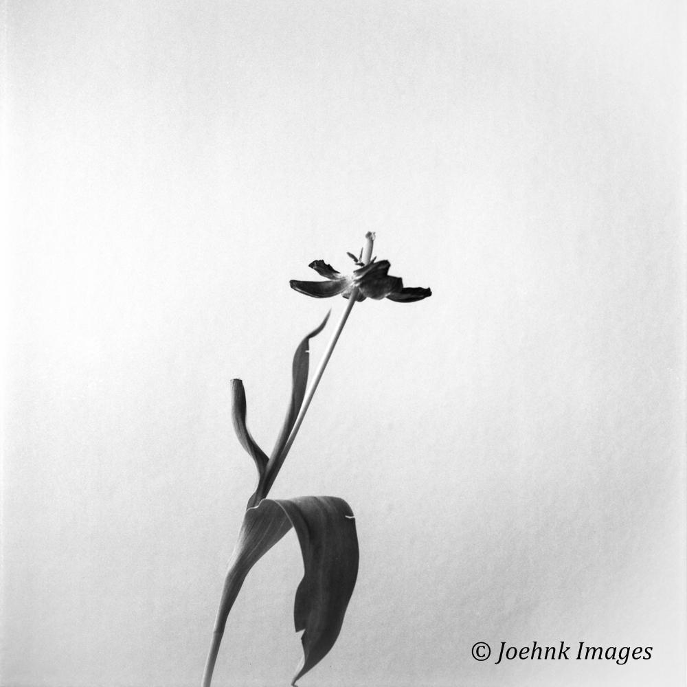Flowers Past #13