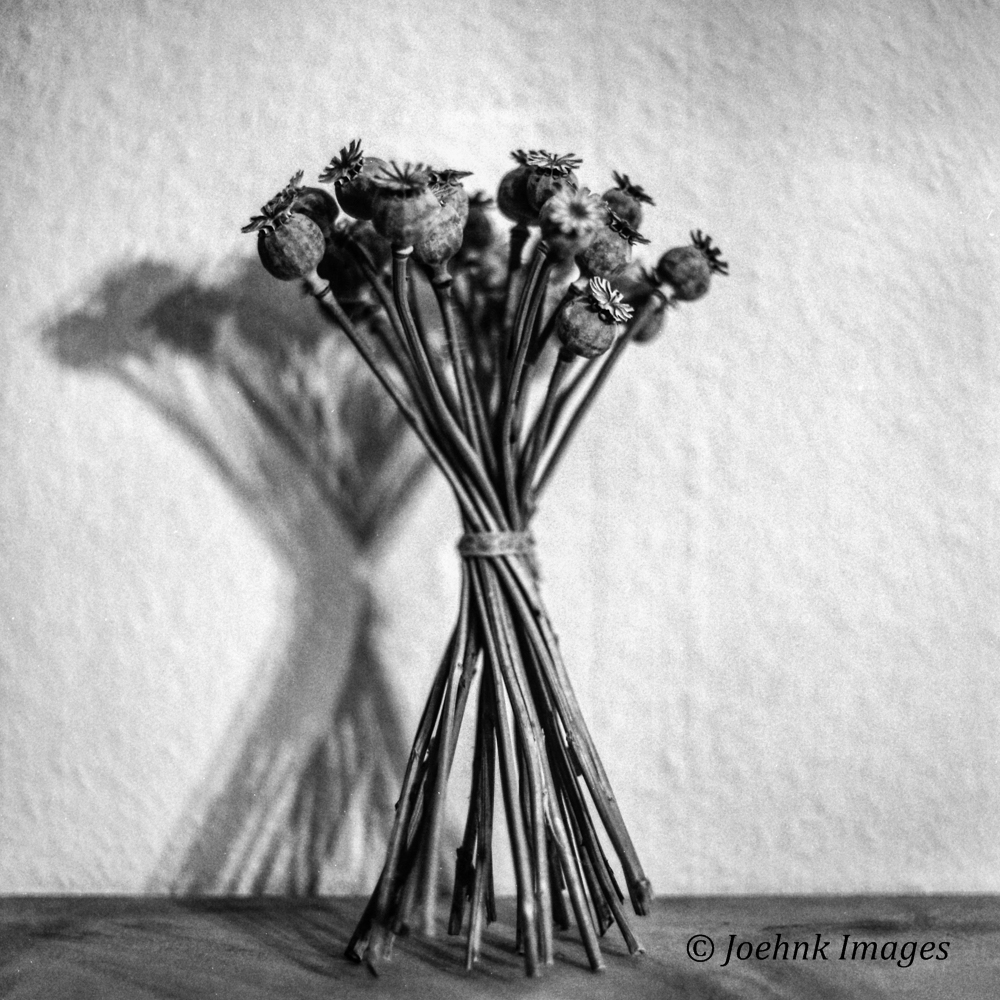 Flowers Past #03