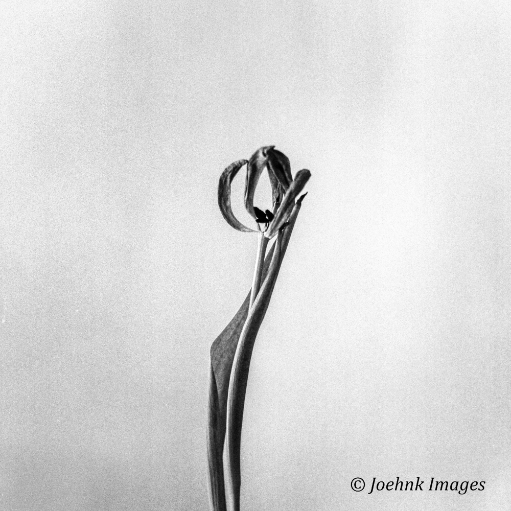 Flowers Past #05