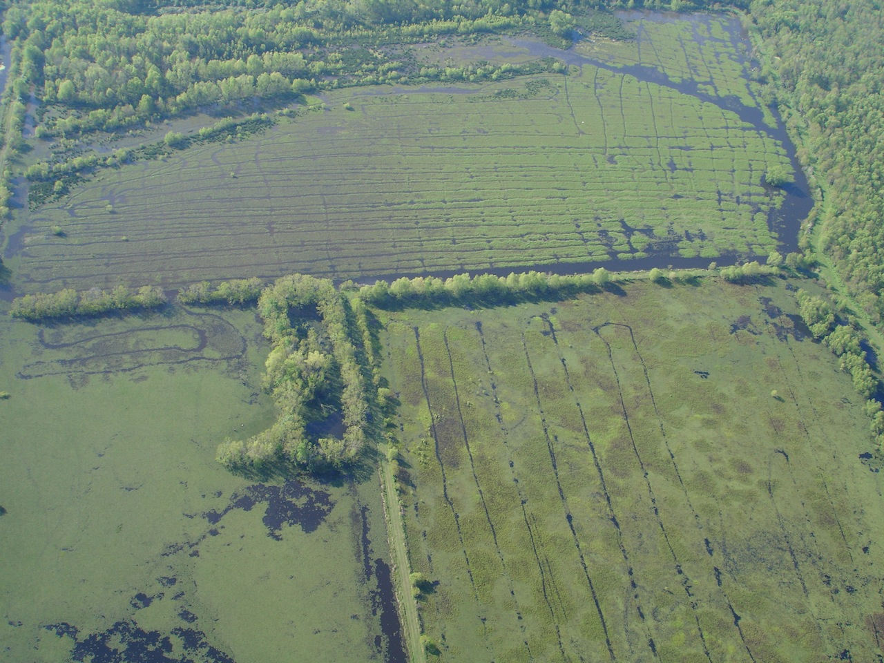Louisiana alligator swamp