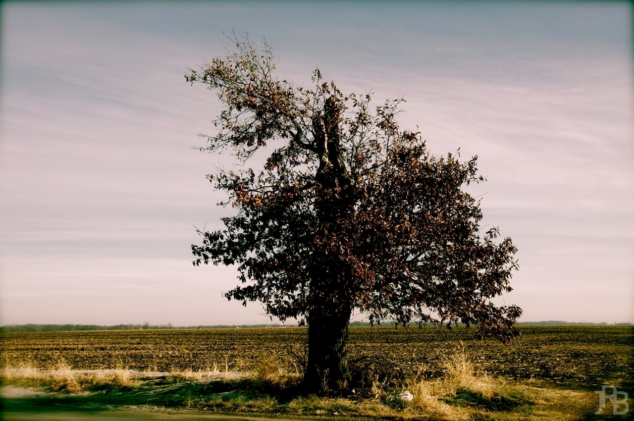 Tree by Field