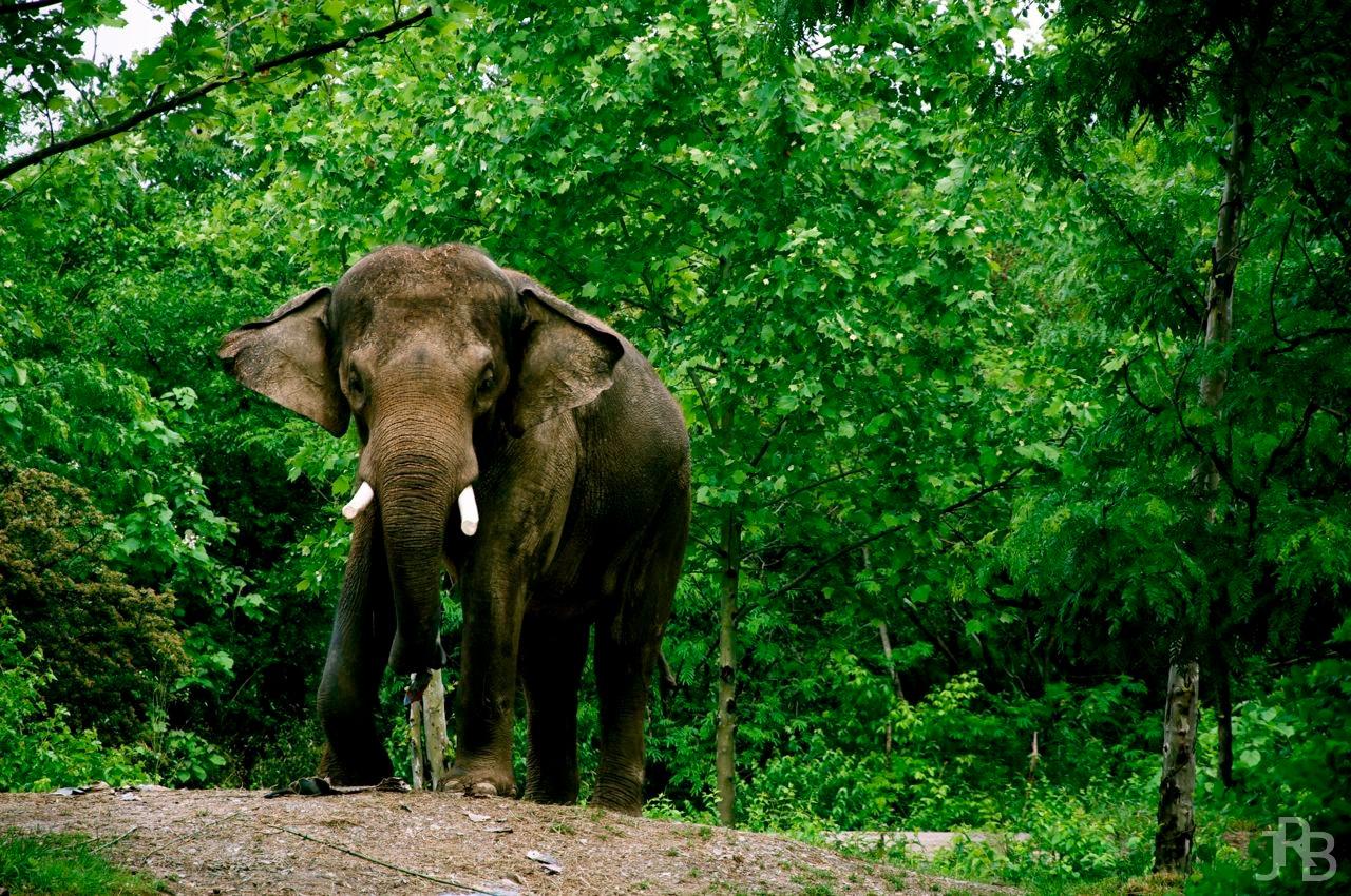 ElephantIII