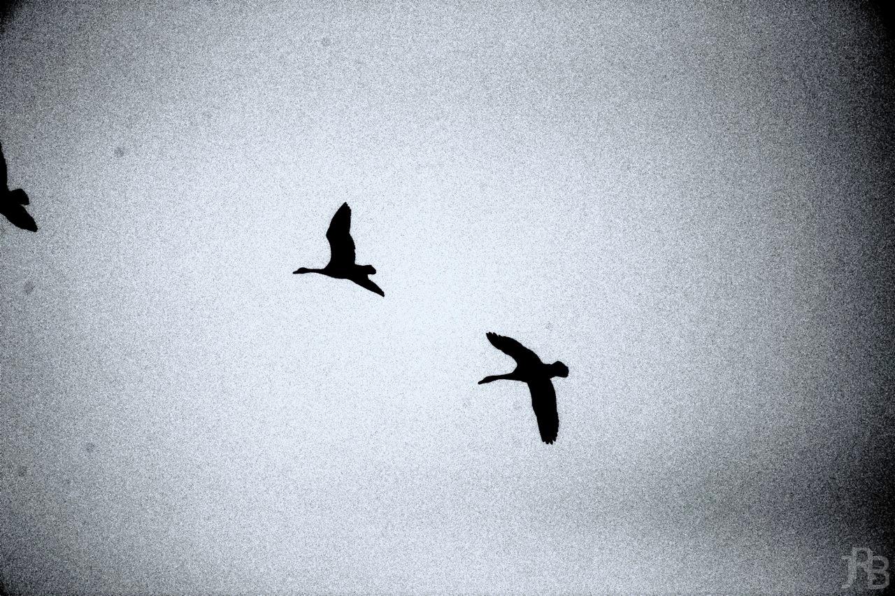 Goose Silhouette II