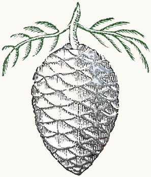 pinecone_engraving.jpg