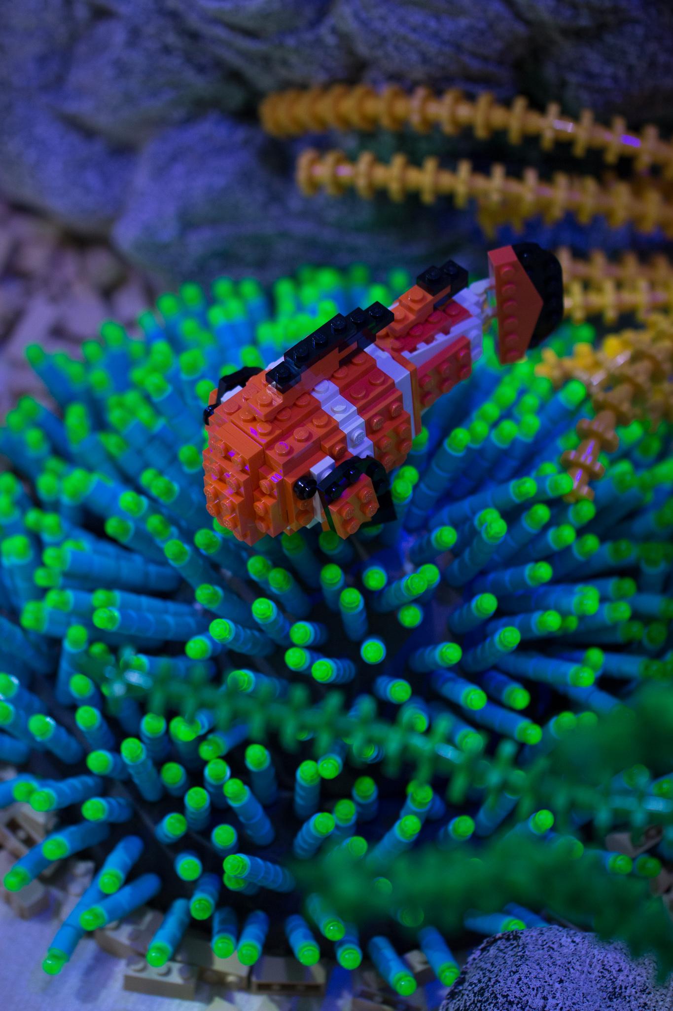 Great Barrier Reef - detail.jpg