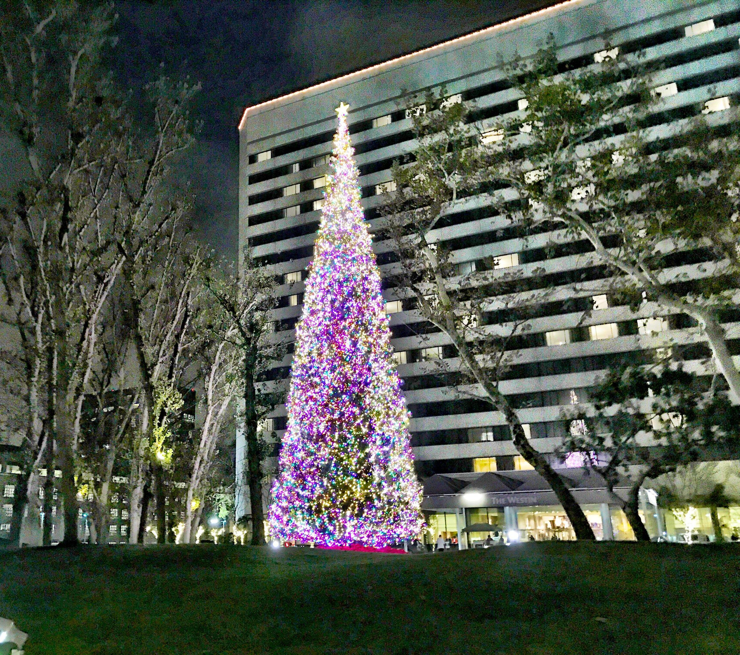 Beautiful Christmas Tree Right Outside South Coast Repertory