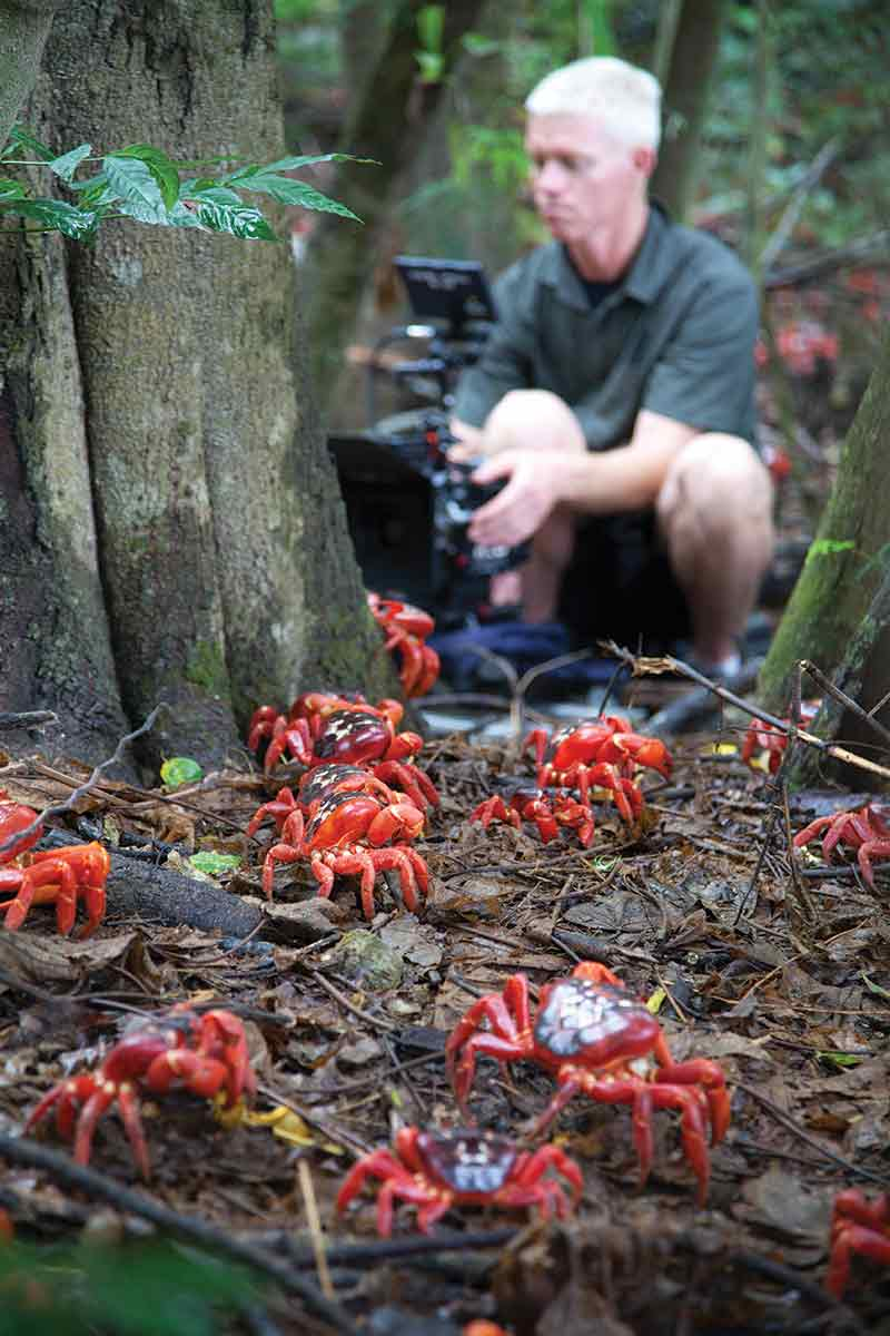 Mateo Willis filming the annual march of red crabs on Australia's Christmas Island.