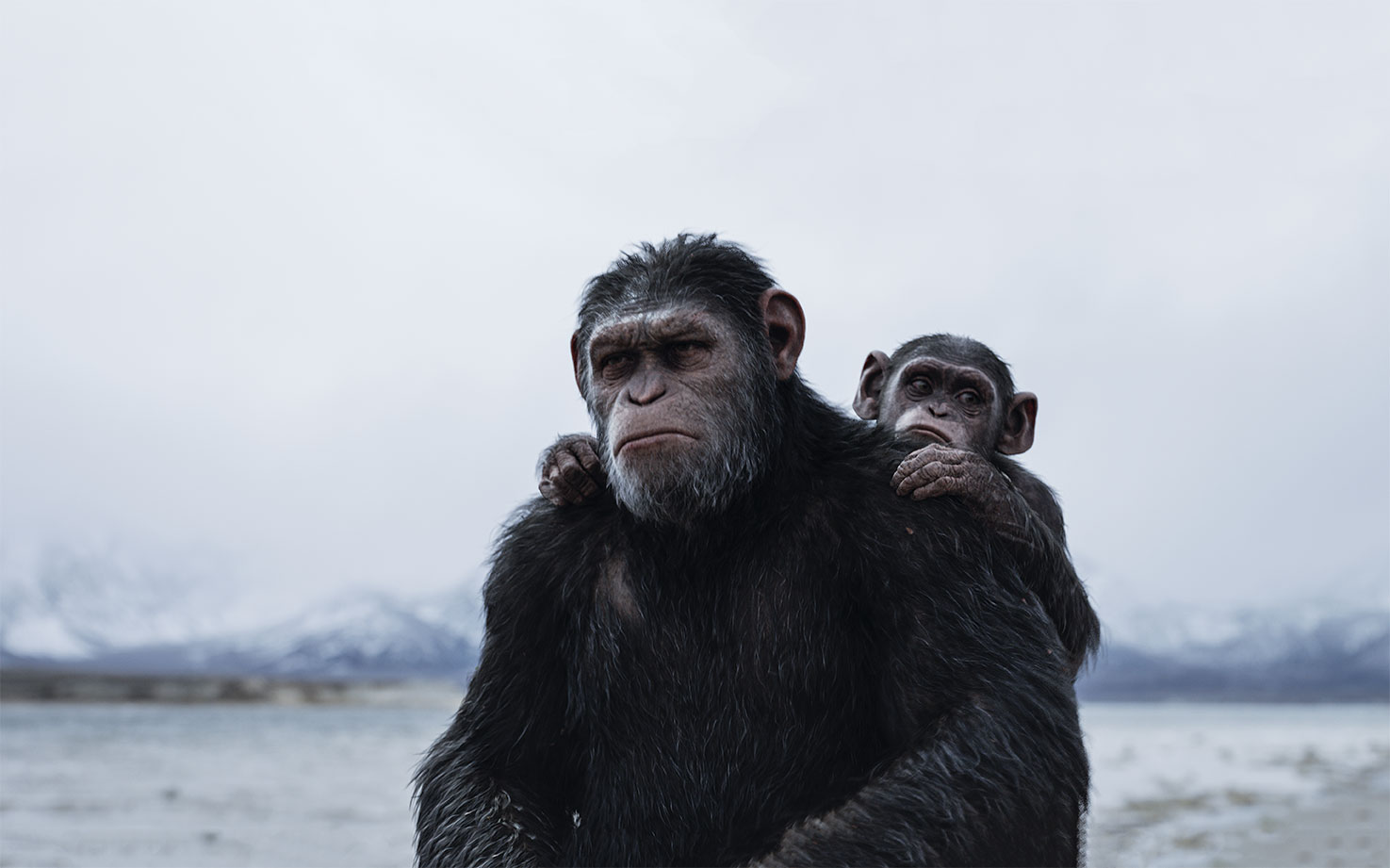 Heart Of Darkness - Shedding Light on War: cinematographer Michael Seresin BSC on War for the Planet of the Apes