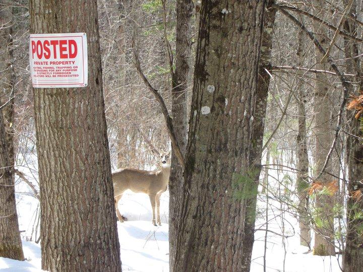 deer always just out of reach!.jpg