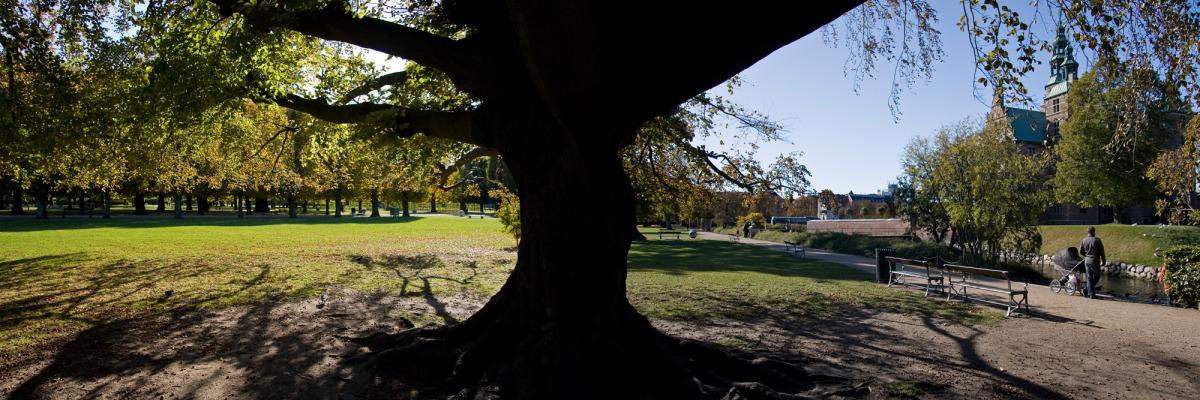 tree panorama_s.jpg