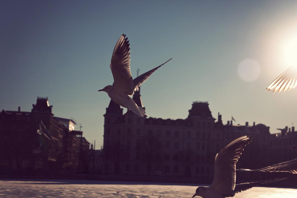 cph_flurry birds.jpg