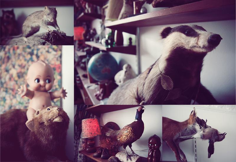 Dead Animal Montage.jpg