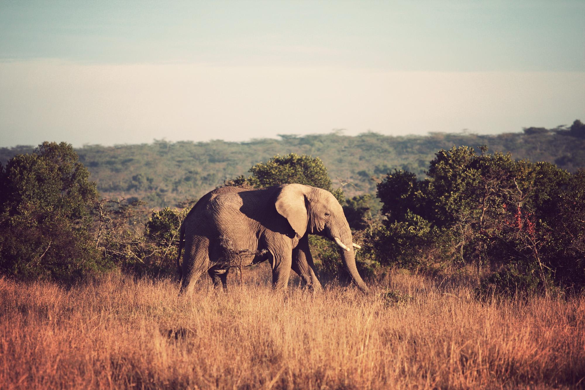 Day02_Sweetwater_Elephants_01.jpg