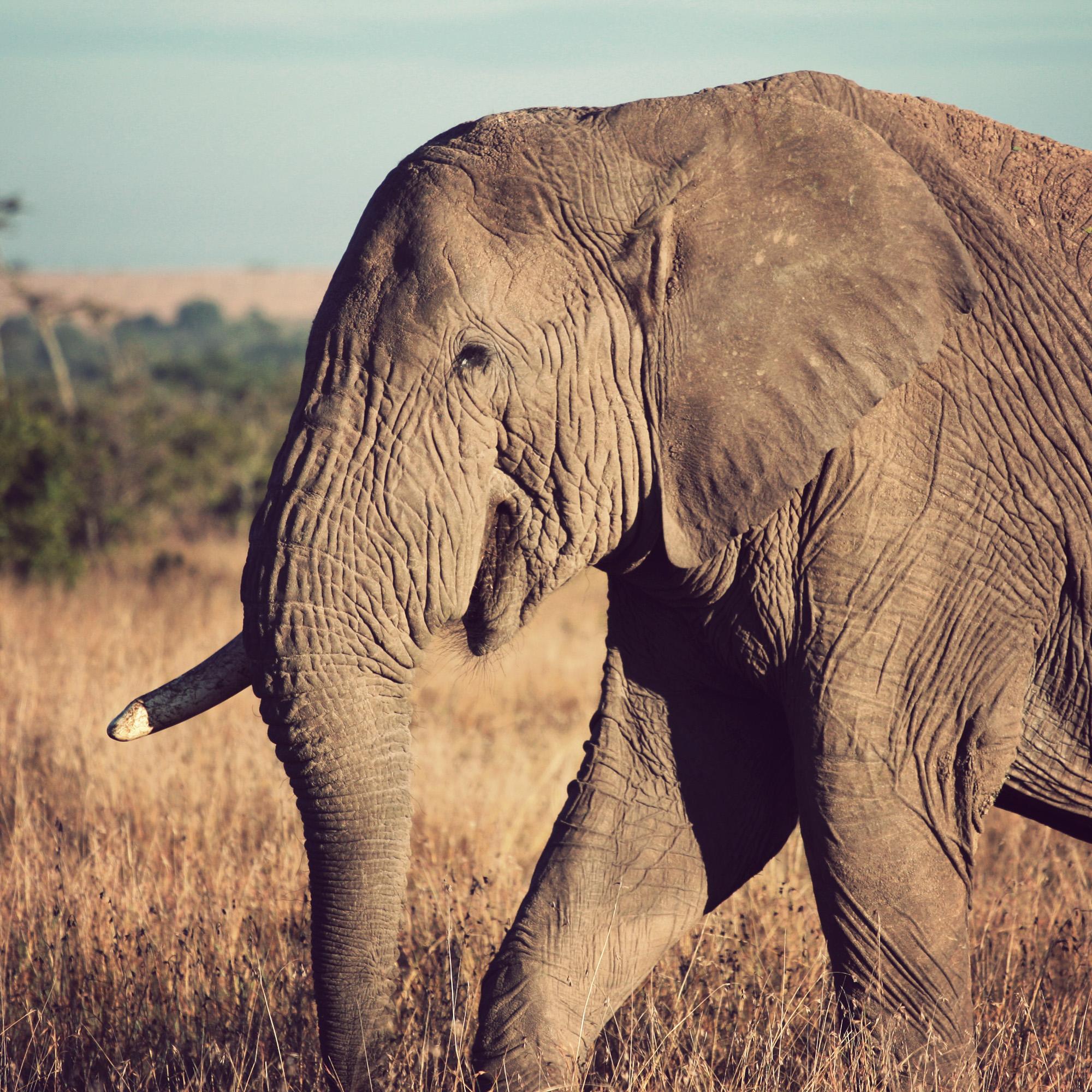 Day02_Sweetwater_Elephants_03.jpg