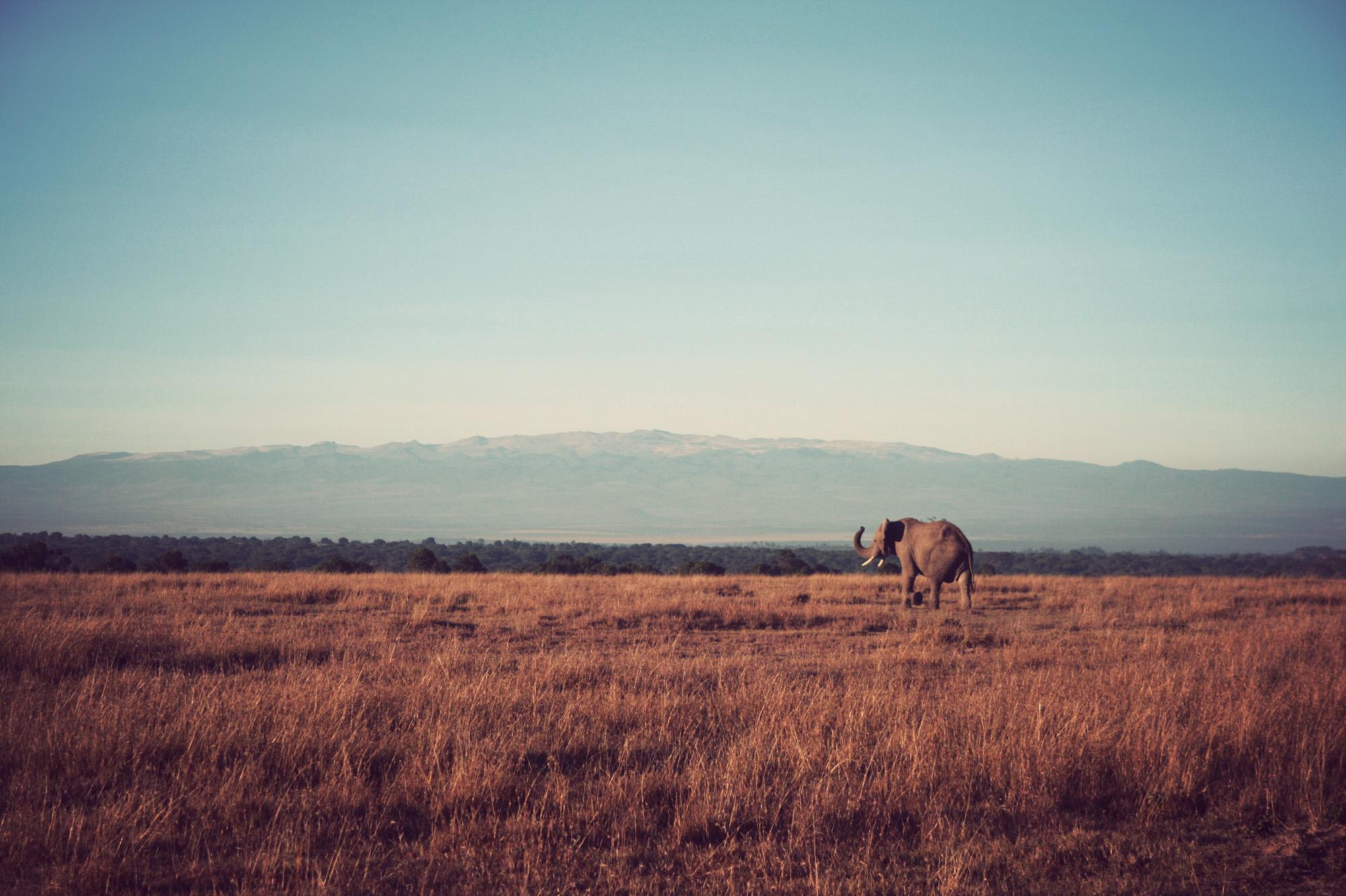Day02_Sweetwater_Elephants_05.jpg