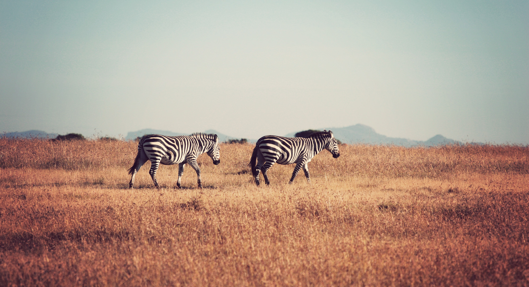 Day02_Sweetwater_Zebras_02.jpg