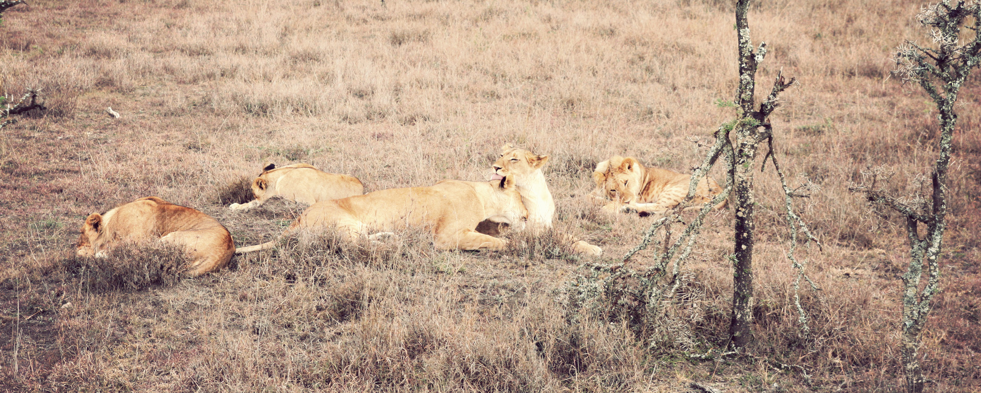 Day02_Sweetwater_Lions_02.jpg