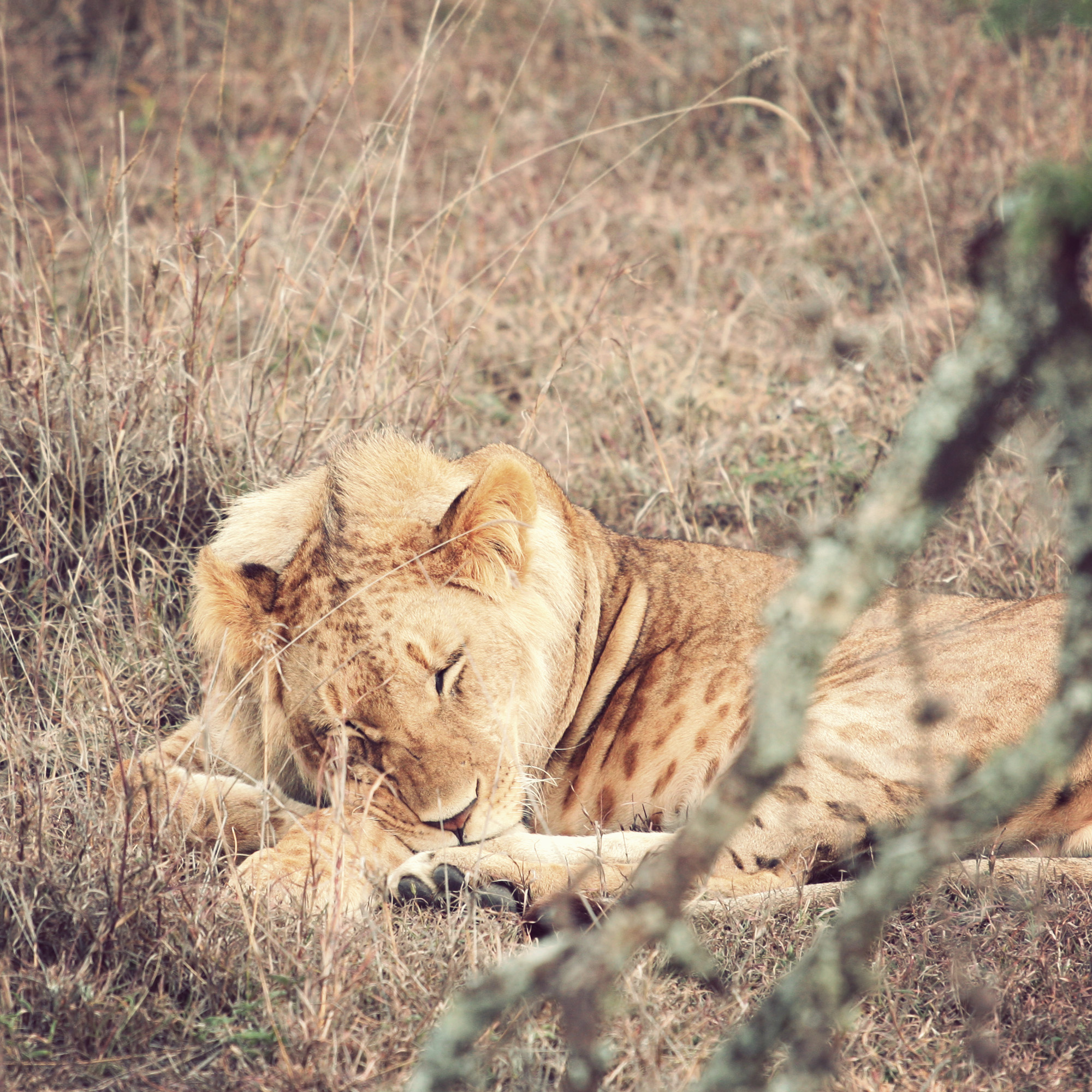 Day02_Sweetwater_Lions_01.jpg