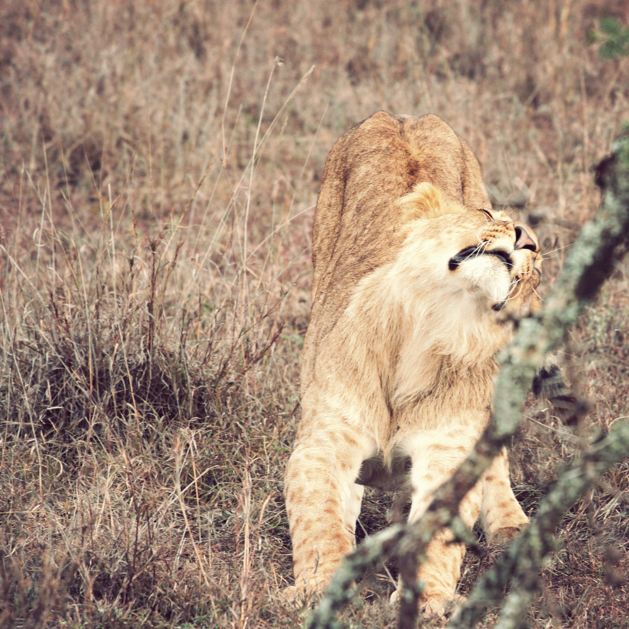 Day02_Sweetwater_Lions_04.jpg