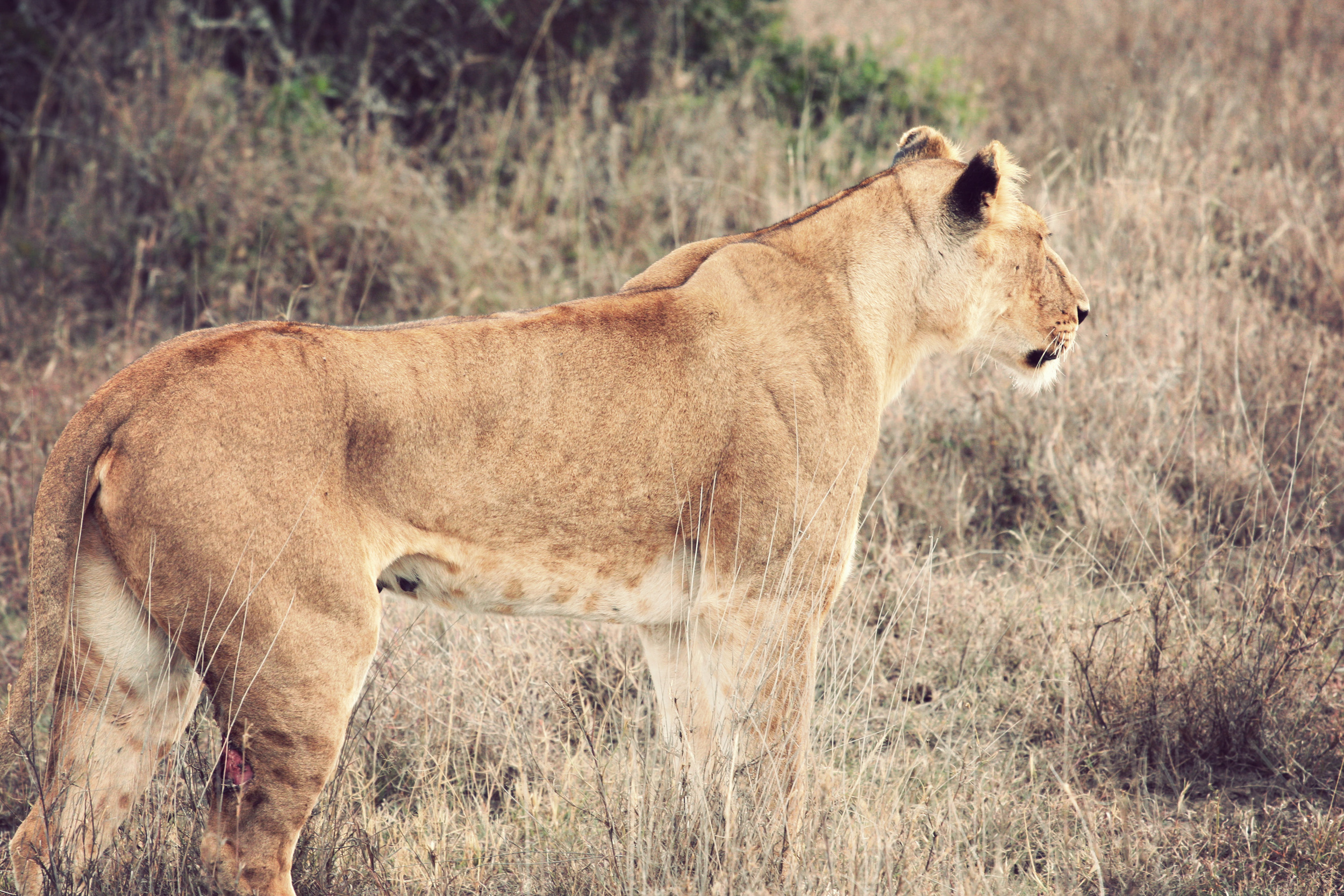 Day02_Sweetwater_Lions_08.jpg