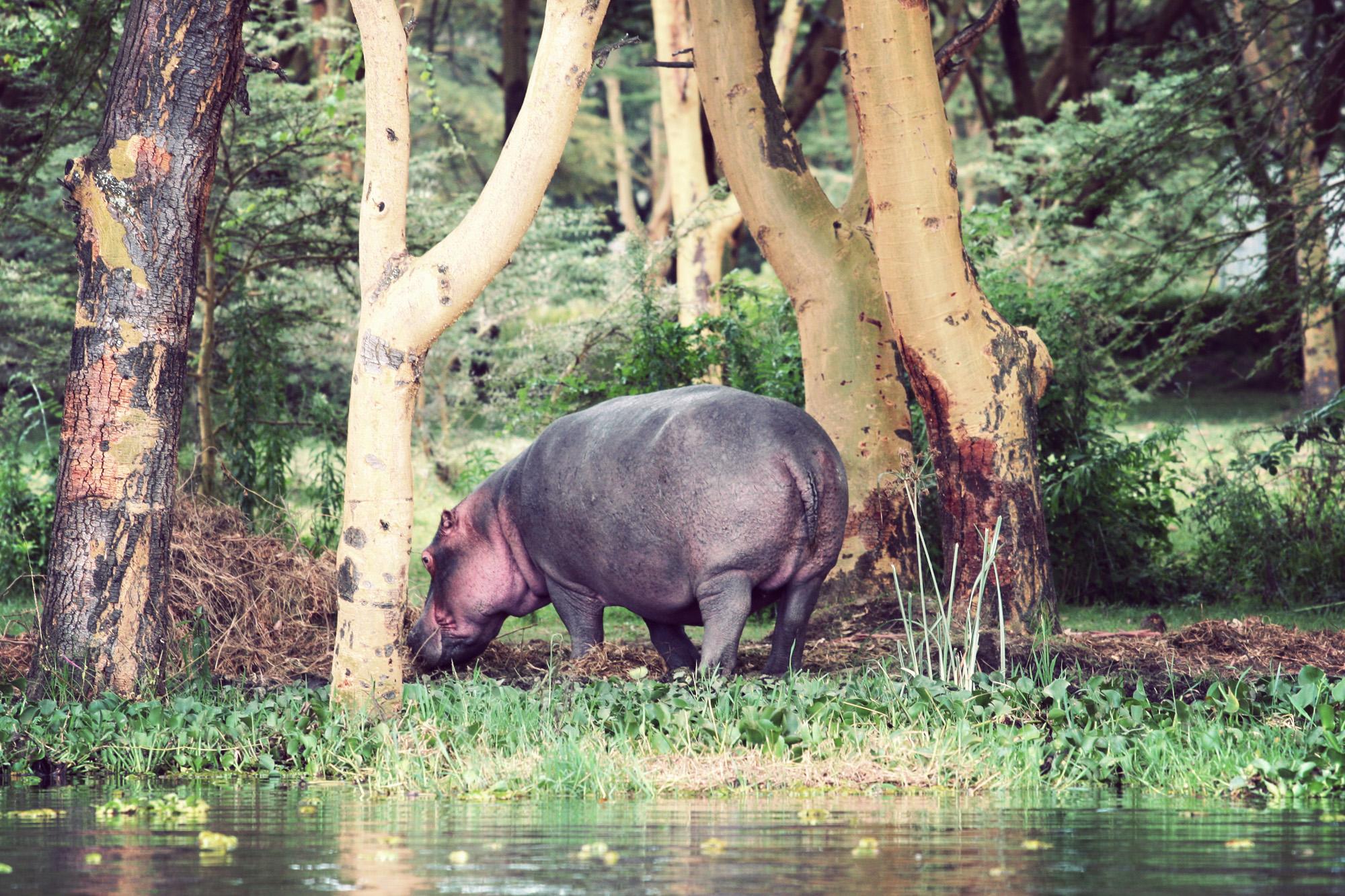 Day03_SOPA_Boat-Safari_Hippos_03.jpg