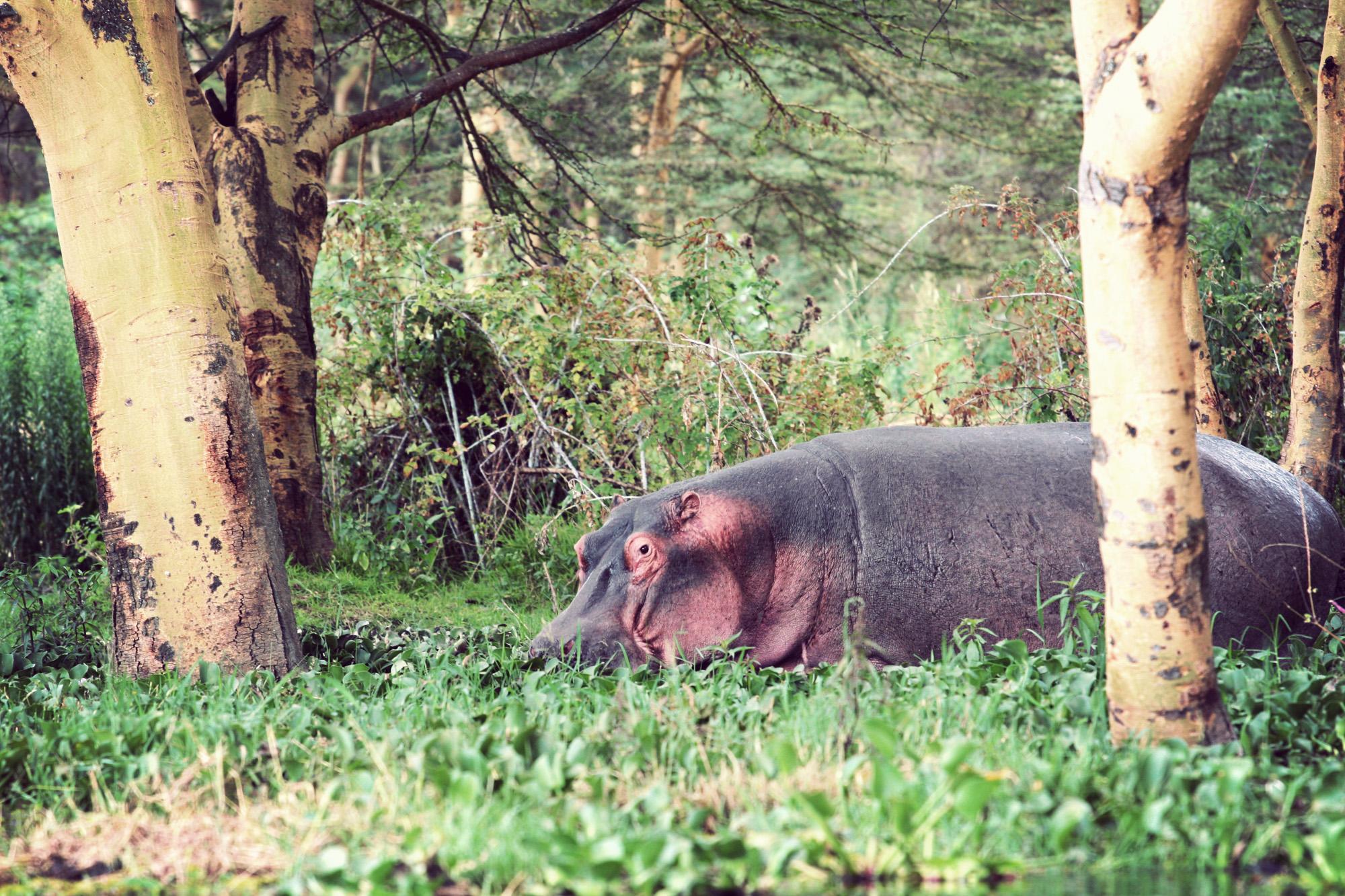 Day03_SOPA_Boat-Safari_Hippos_02.jpg
