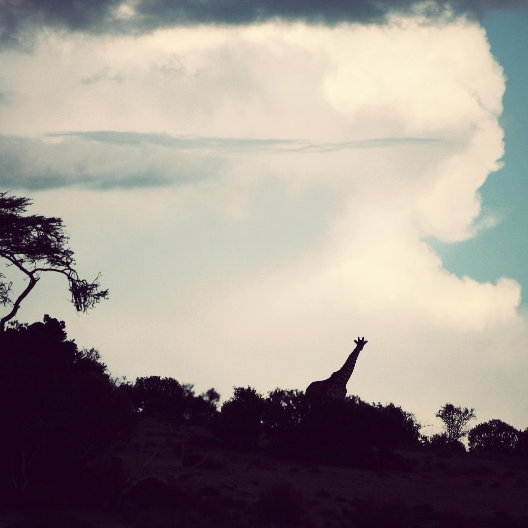 Day03_SOPA_Walking-Safari_Giraffe.jpg