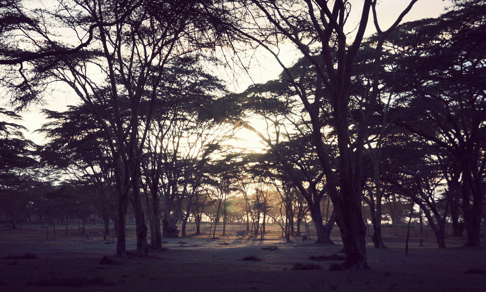 Day03_SOPA_Walking-Safari_Zebra.jpg