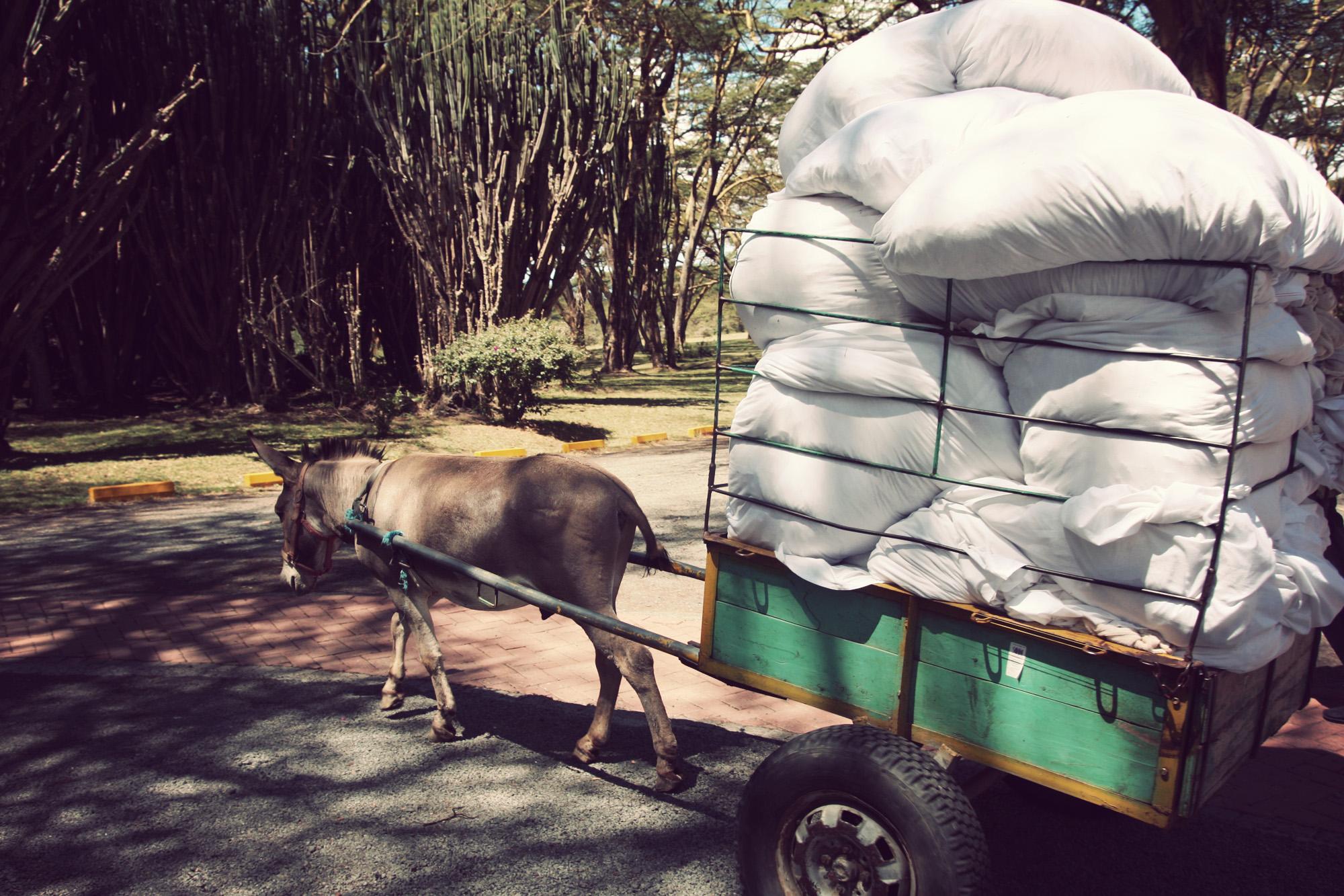 I think we can all agree we need laundry donkeys.