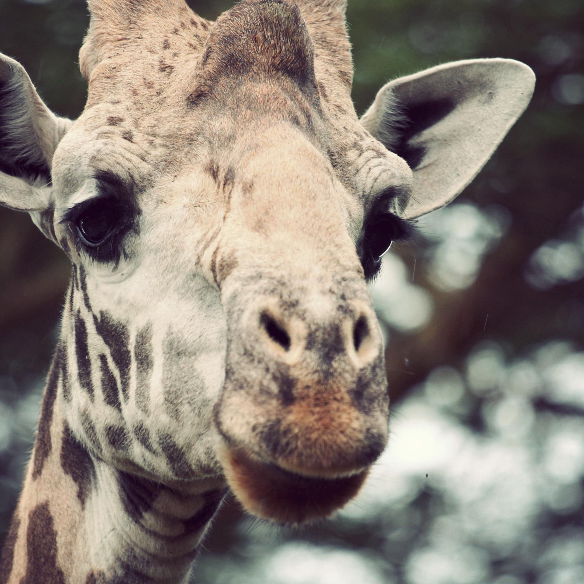 Day04_SOPA_Giraffe_03.jpg