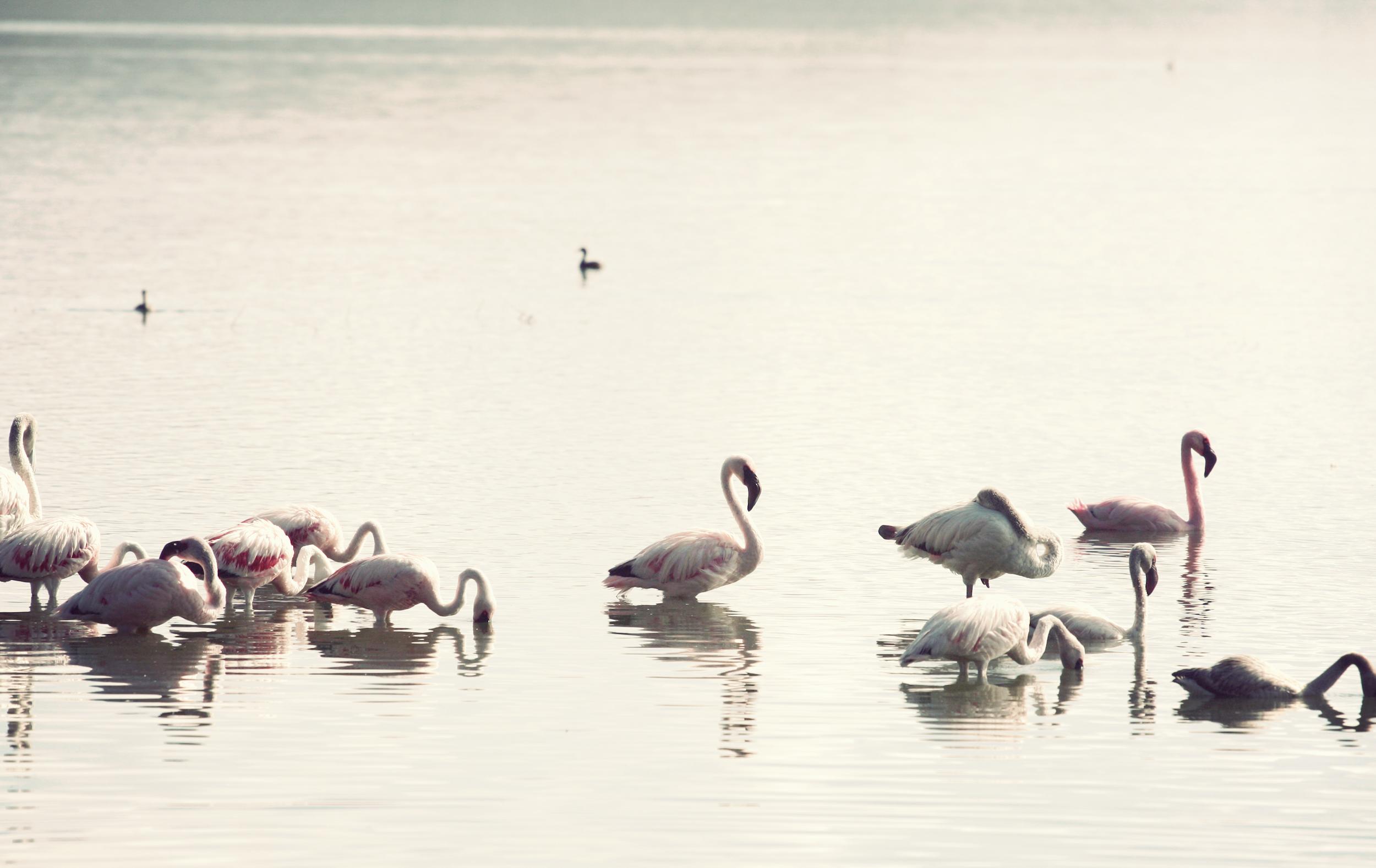 Day05_Flamingos_05.jpg