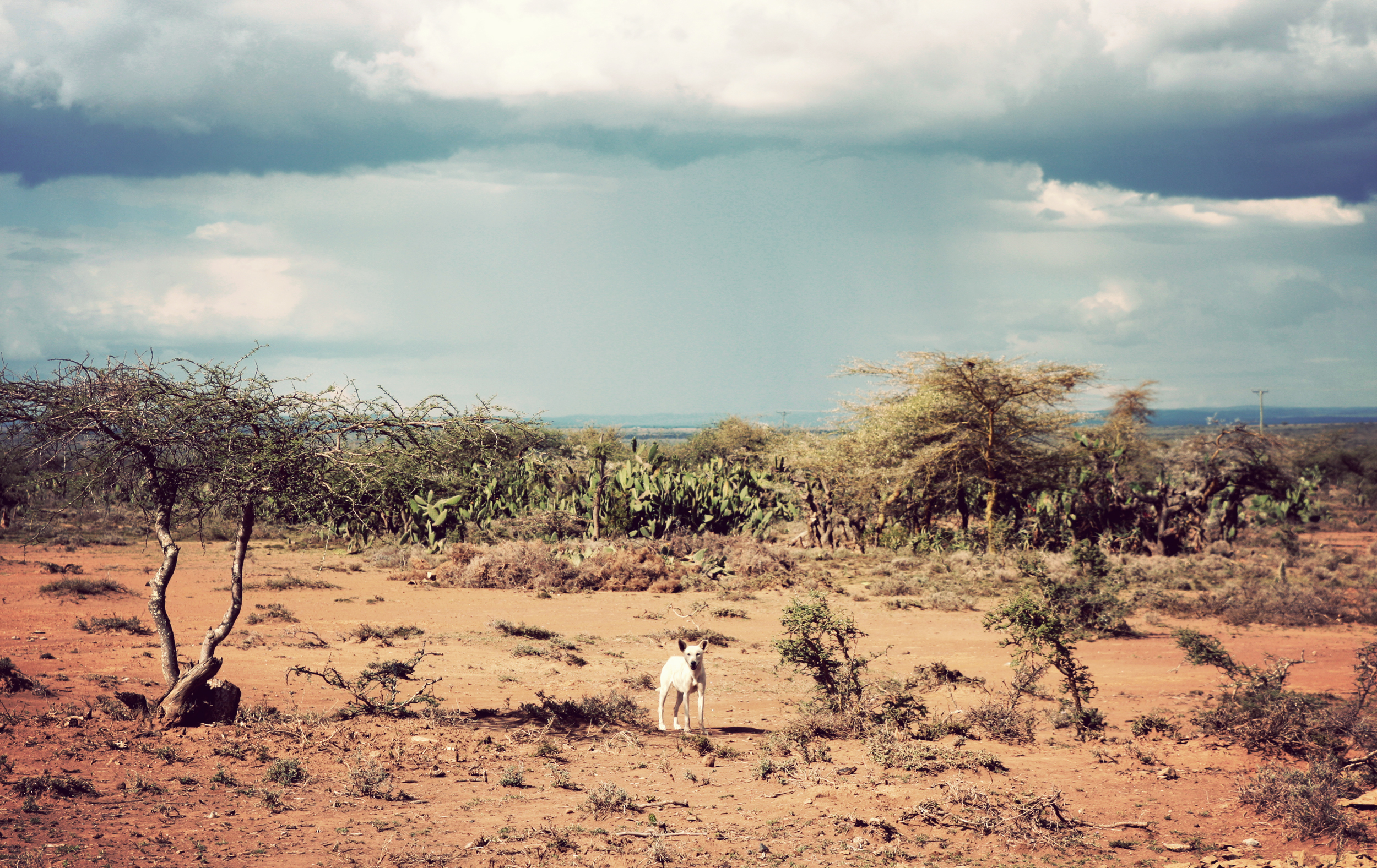 Cute little Maasai dog looking for some tasty treats