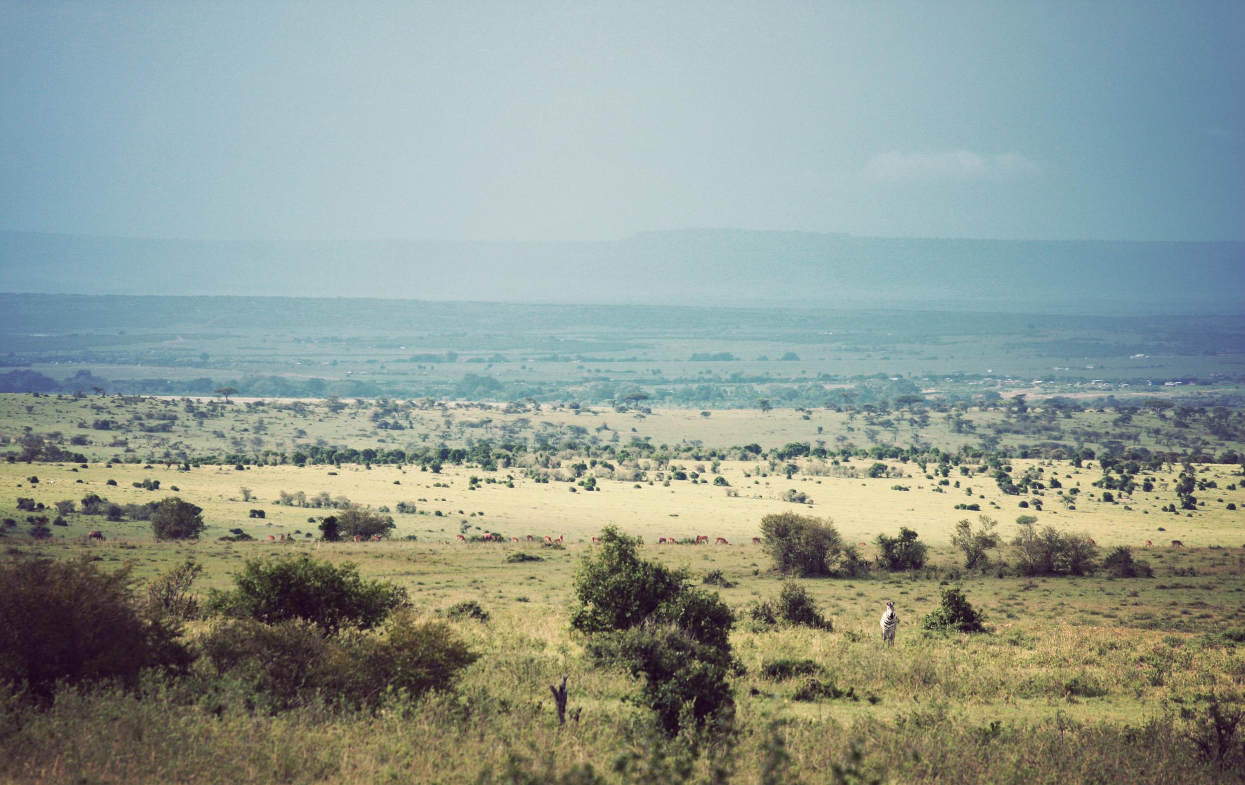 Maasai Mara - because mara means 'spotted' landscape.