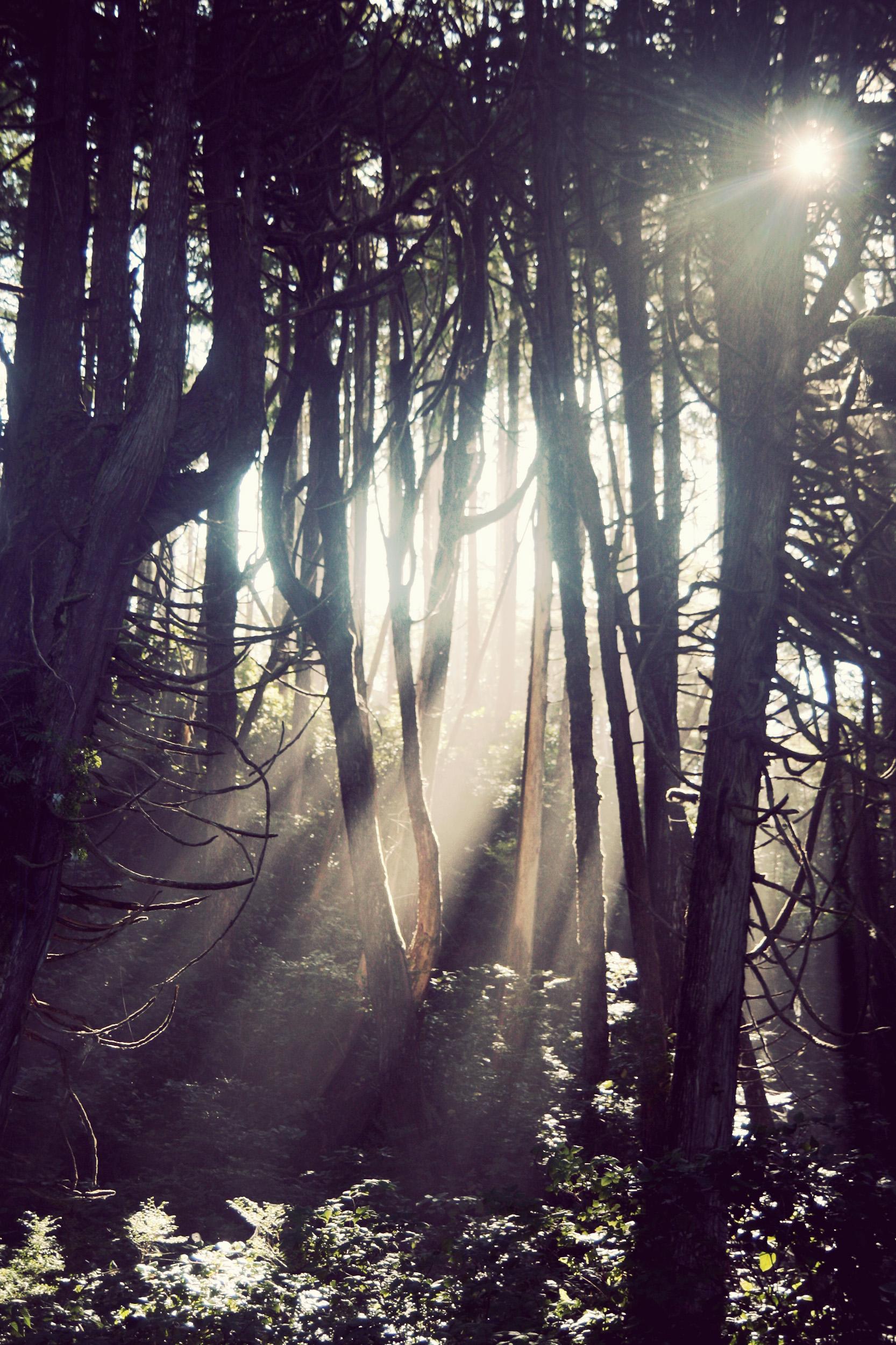 Wya-Point-Treelights_03.jpg