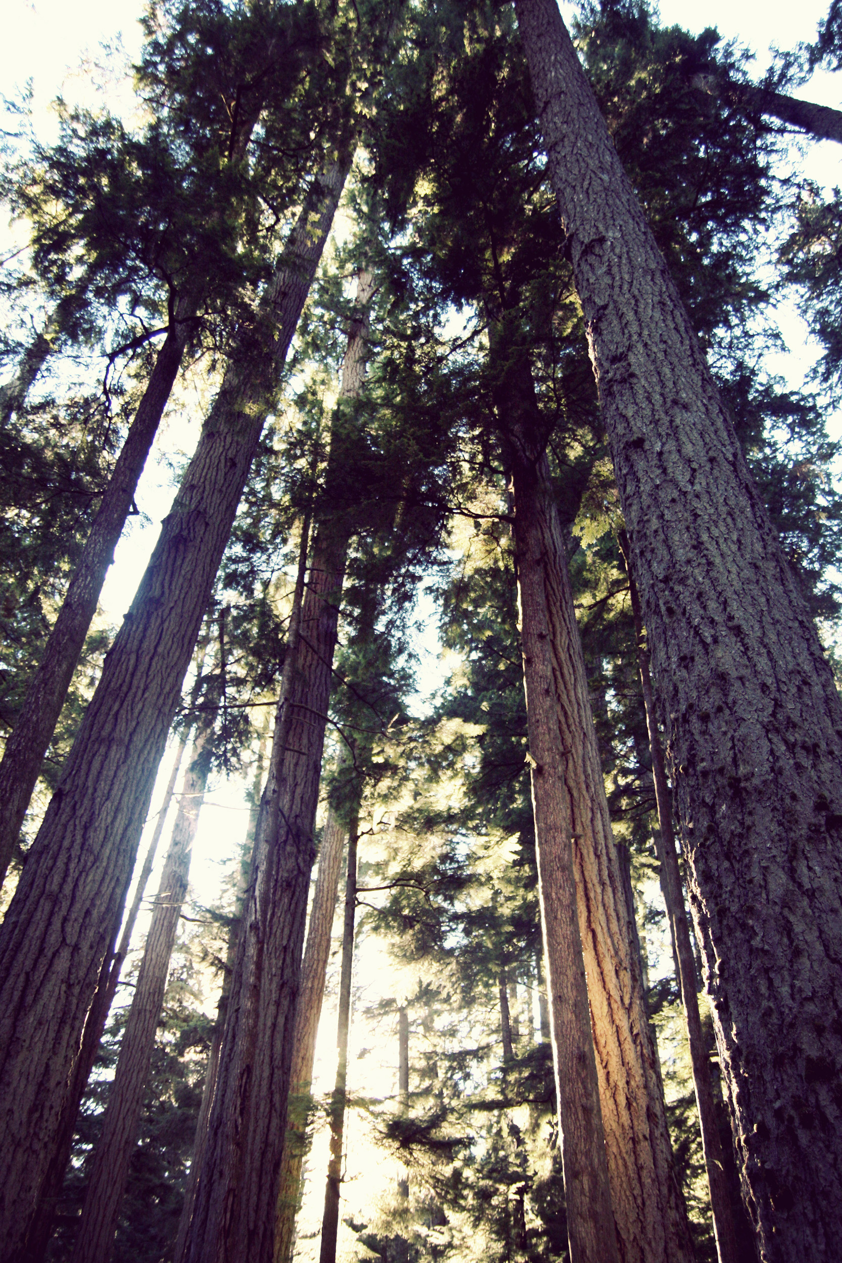 Cathedral-Grove_21.jpg