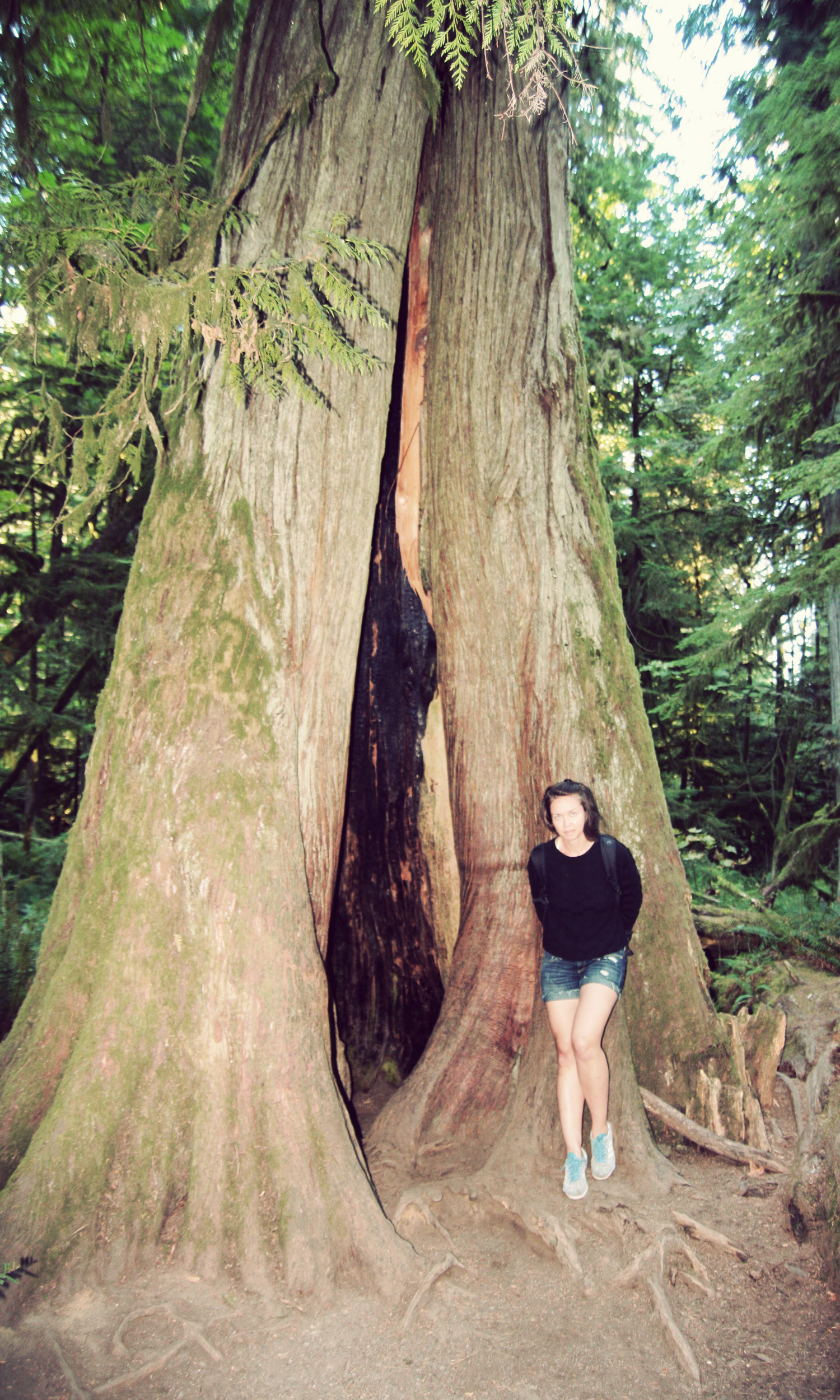 Cathedral-Grove_15.jpg