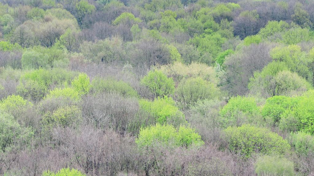 Overlooking the Tiergarten from the Victory Tower