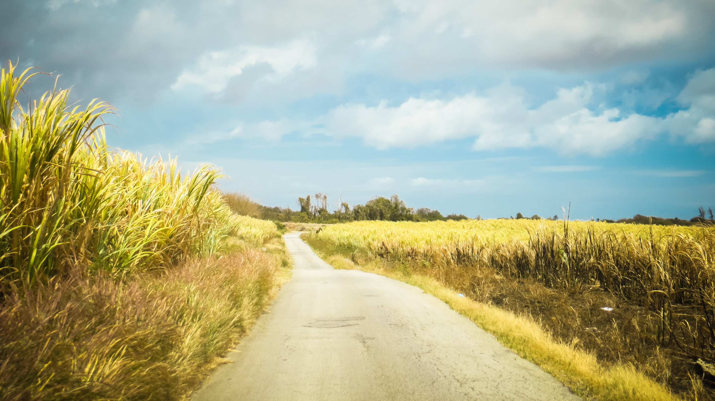 Driving through narrow back roads in the cane fields