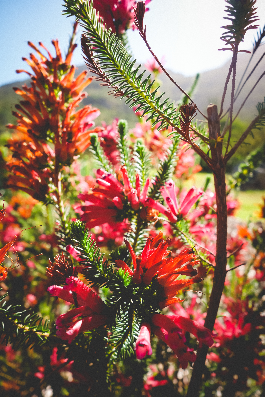 Kirstenbosch-33.jpg