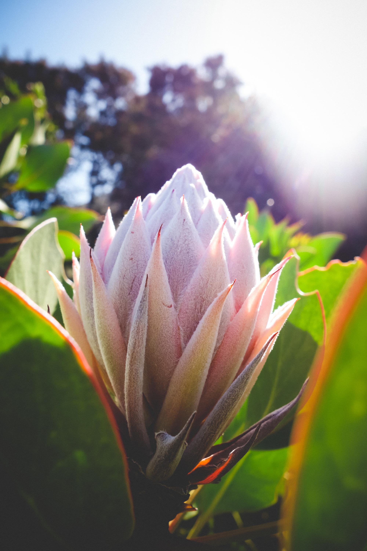 Kirstenbosch-36.jpg
