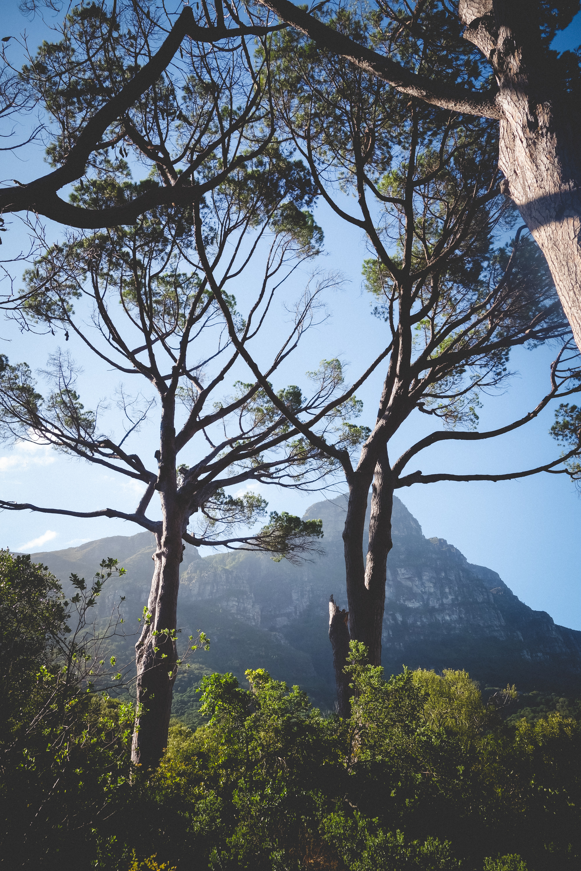 Kirstenbosch-44.jpg