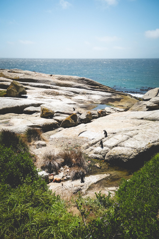 Boulders Beach Penguins-3.jpg