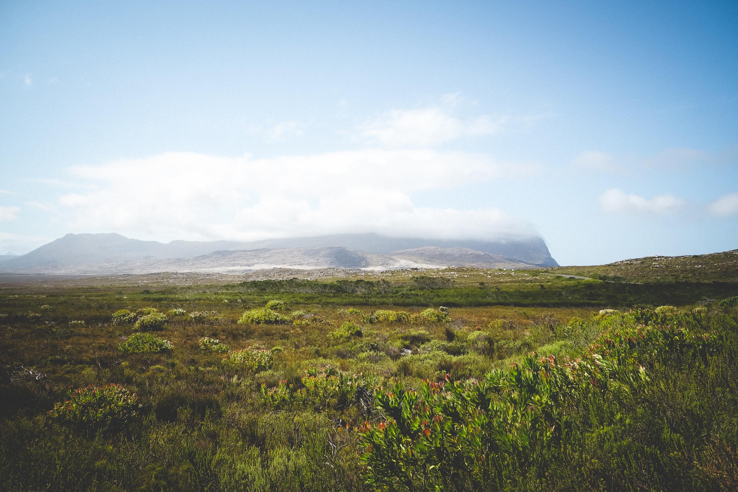 Cape Point Fynbos-16.jpg