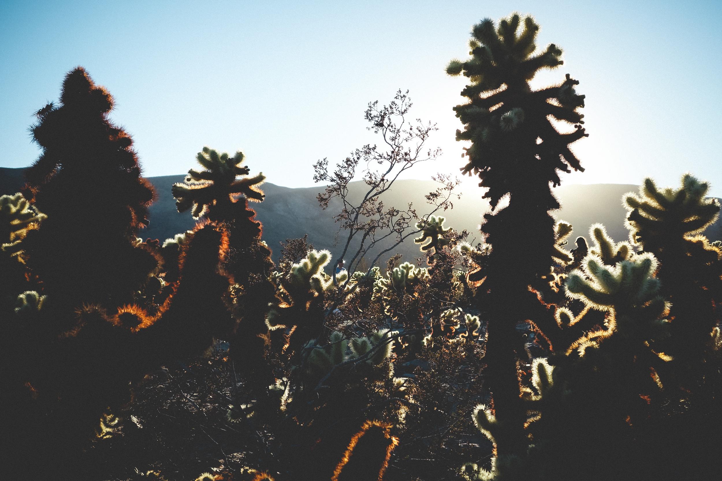 Joshua-Tree-51.jpg
