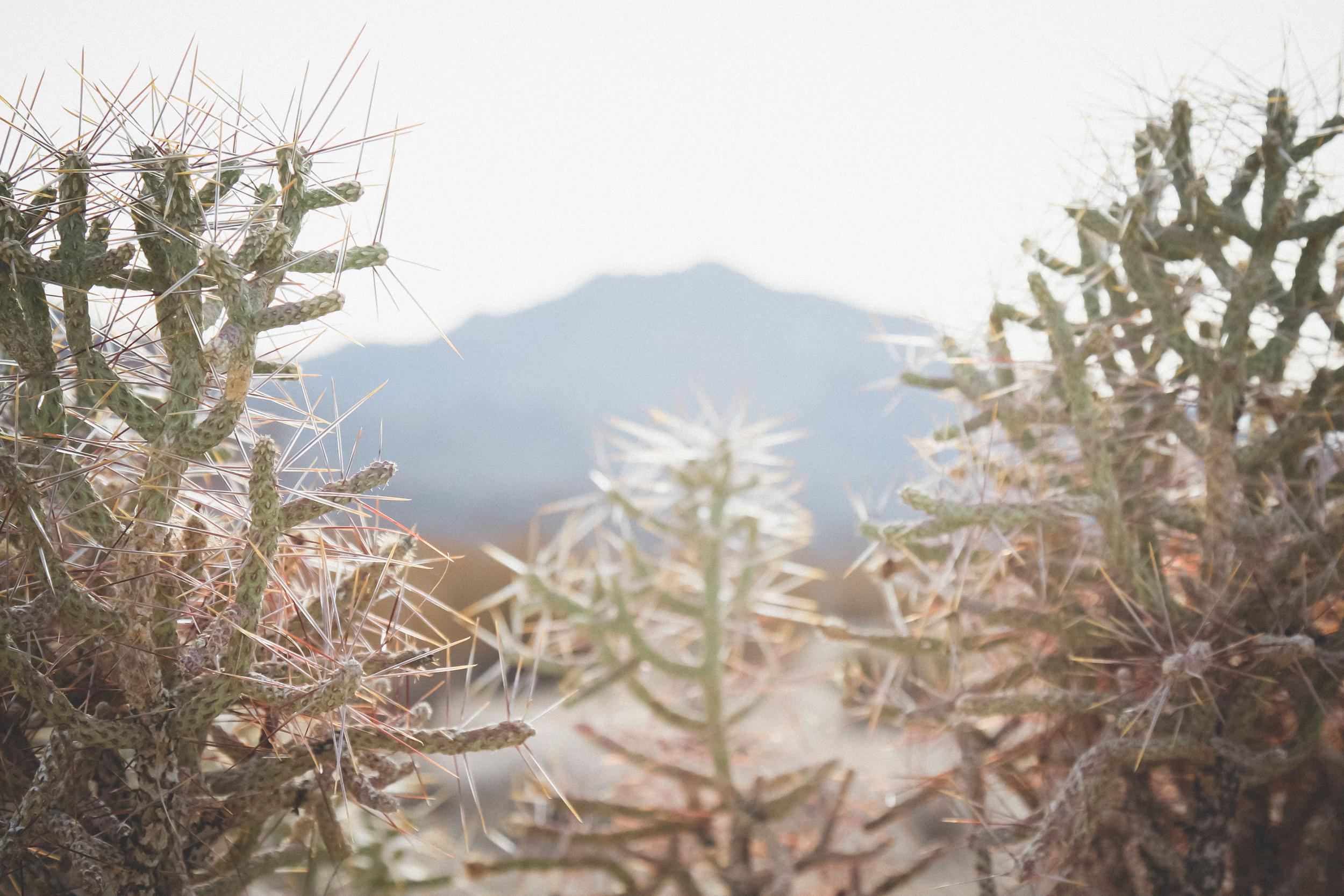Mojave-Desert-25.jpg