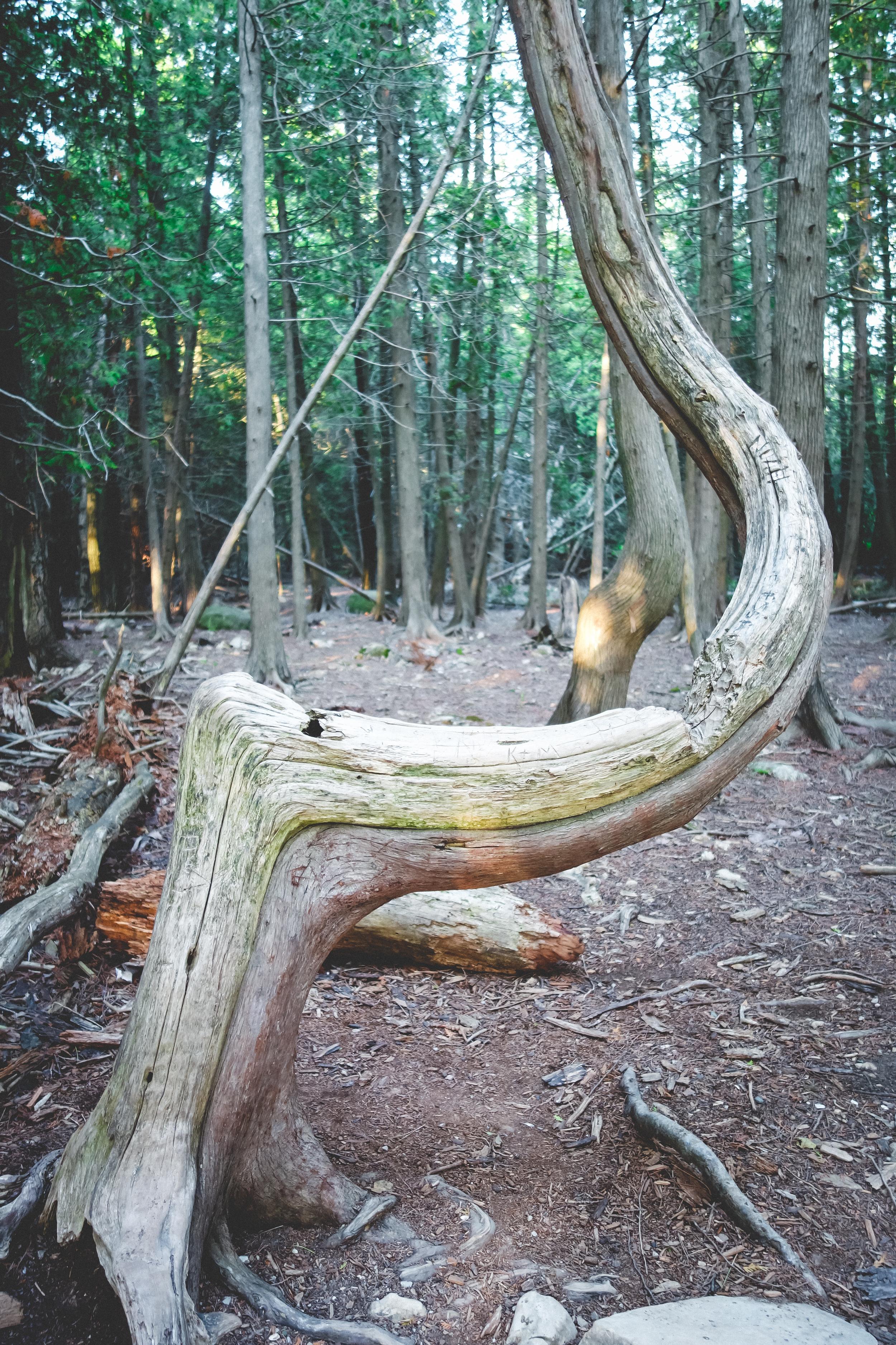 CyprusTrees-1.jpg