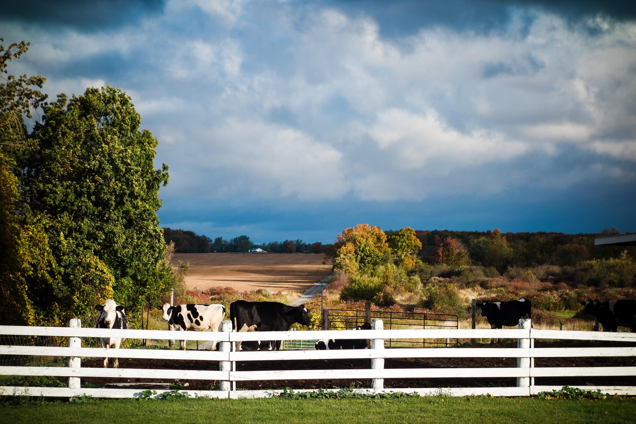 Prince Edward County-31.jpg
