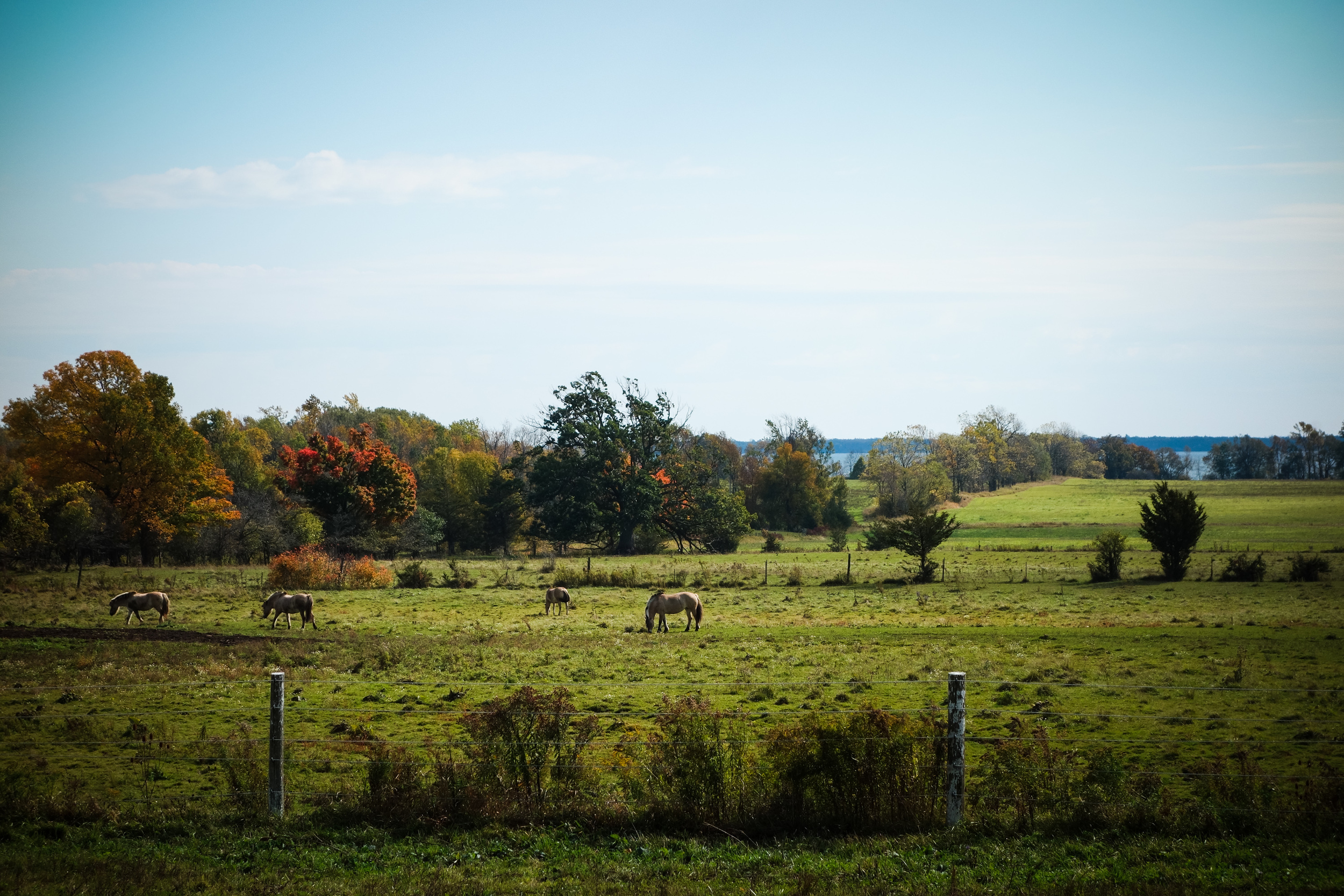 Prince Edward County-69.jpg